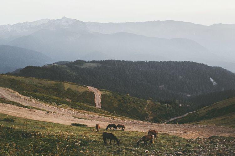 Horses grazing on mountain against sky