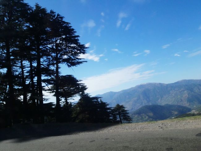Devdar Trees Nature Cloud - Sky Mountain Blue Katra Jammu And Kashmir On The Way SriNagar..❄