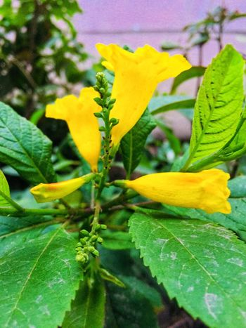 Leaf Growth Flower Plant Nature Freshness Green Color Close-up No People Outdoors Flower Head Beauty In Nature Petal Yellow Day Fragility