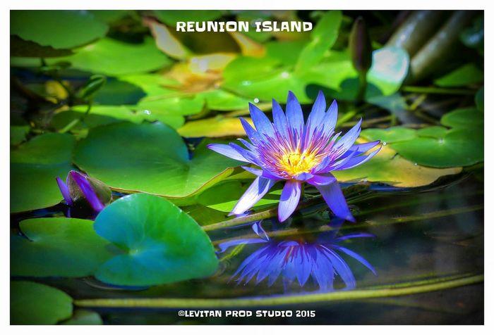 Hanging Out Taking Photos Hello World Enjoying Life Flowers Nature ST DENIS Reunion Island