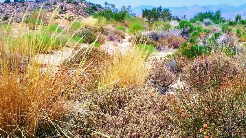 Nature Outdoors Growth Grass Beauty In Nature Day Field No People Plant Tranquility Multi Colored Landscape Flower Scenics Water Sky Southern California