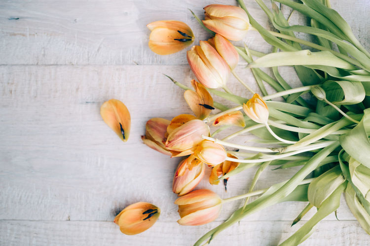 GREETINGS FROM THE NETHERLANDS Flowering Plant Flower Plant Freshness Petal Vulnerability  Fragility Beauty In Nature Inflorescence Flower Head Close-up Nature Indoors  No People Table High Angle View Directly Above Orange Color Day Tulips Old Faded Beauty Faded