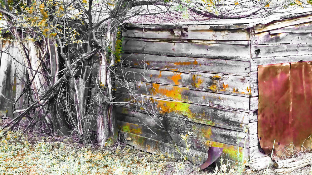 Abandoned Bad Condition Damaged Deterioration Mildew Nature Old Pattern Rusted Rusty Textured  Weathered Wooden Worland Worland WY Wyoming