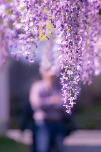 Light violet -wisteria and men- Cute Flower Funny Men Nara People Same  Same Color Spring Warm Wisteria
