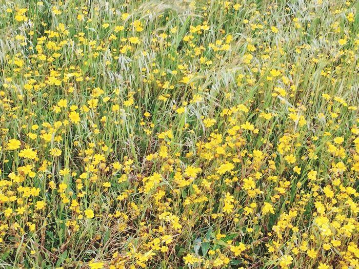Fields Flowers Wild Flowers Crantock