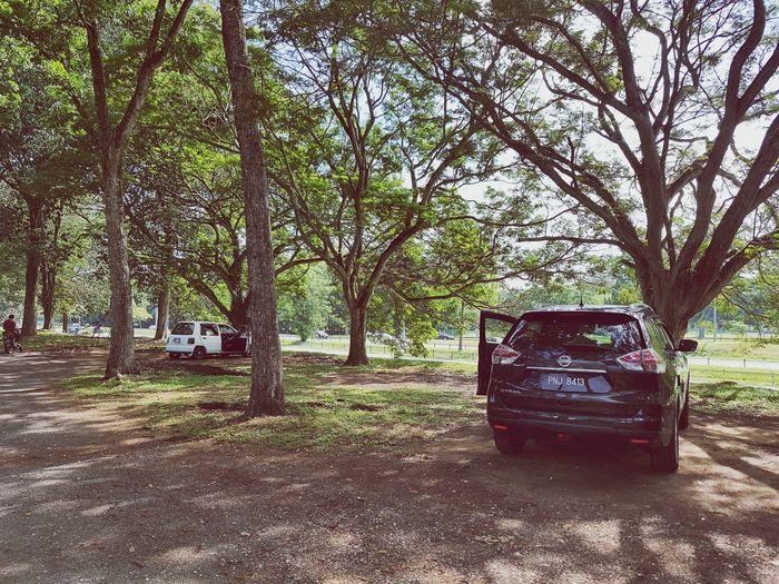 Pitstop... Tree