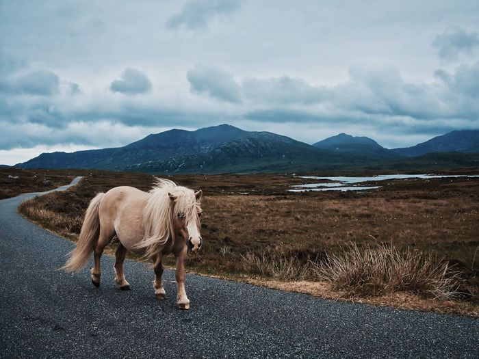 Horse standing on road by field against sky