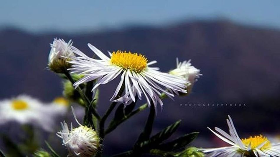 Don't wait for someone to bring you flowers... Plant your own garden.. Decorate your own soul.. 💓 Flower Flowerporn Yellow Natureaddict Naturography Natureseekers Nikonphotography Nikon_photographs L820 Nikontop Wide Shimla_diaries Throwback Oldone 2014 Instadaily Photographyislife Photography_love Photographybros