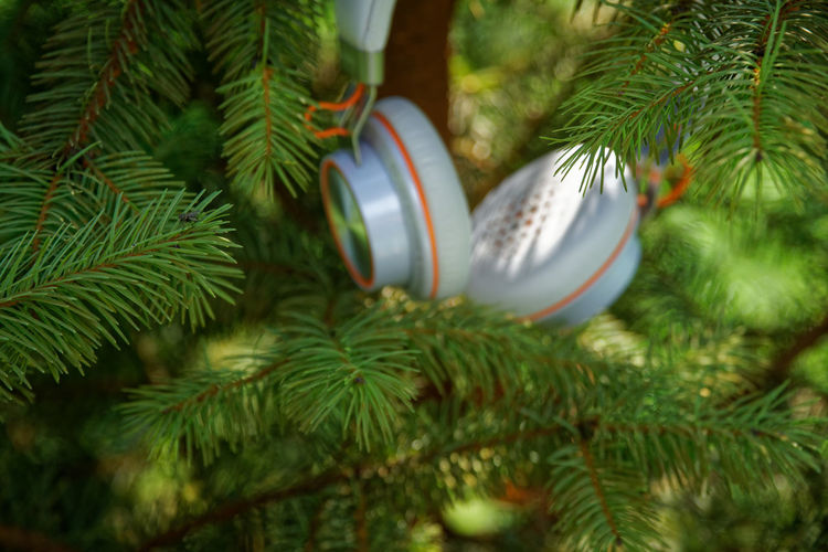 Headphone Earphones Freshness Grass Headphones Kiev Music Branch Celebration Christmas Christmas Decoration Christmas Ornament christmas tree Close-up Concept Coniferous Tree Day Decoration Focus On Foreground Green Color Growth Headphone Holiday Idea Leaf Musical Equipment Musician Nature Needle - Plant Part No People Outdoors Park Pine Tree Plant Plant Part Silver Colored Song Tree