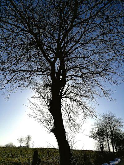 Nature Walking Baum 🌳🌲 Licht Und Schatten Spaziergang
