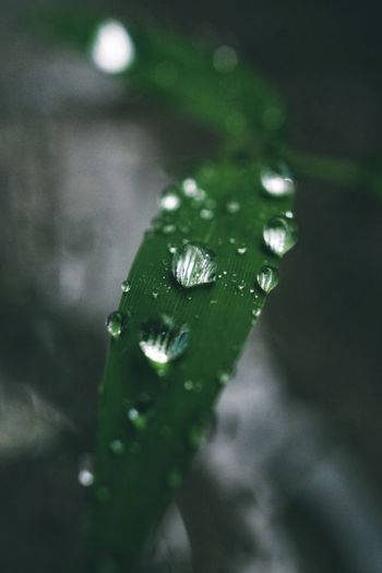 droplets of