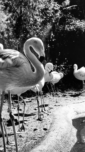 Sony RX100 IV EyeEm The Best Shots My Unique Style Black And White Monochrome Zoo Animals  Bird Moment Lens Enjoying The Moment Helloworld FromChile