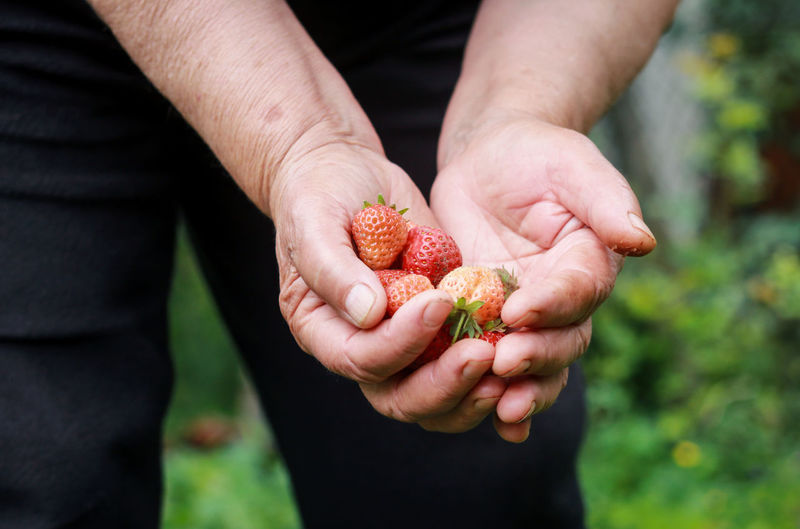 Close-up of man holding strawberries