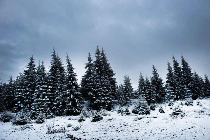 Winter nature scene with snow covered fir trees in the mountains. Christmas greetings Christmas Hoarfrost Snow ❄ Beauty In Nature Cold Temperature Day Fir Greetings Nature No People Outdoors Pine Tree Rime On Tree Scenics Sky Snow Snow Covered Trees Spruce Tranquil Scene Tranquility Tree Weather White Color Winter Winter Wonderland