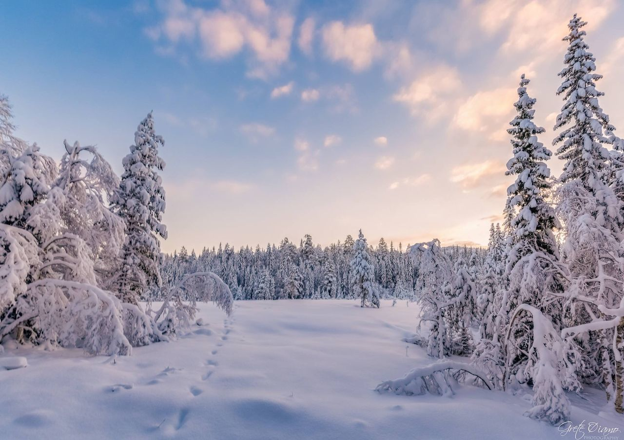 snow, cold temperature, winter, nature, tree, beauty in nature, white color, field, no people, weather, landscape, scenics, tranquil scene, tranquility, sky, outdoors, bare tree, day