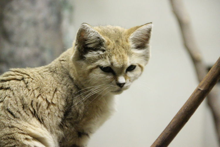 Low angle view of sand cat