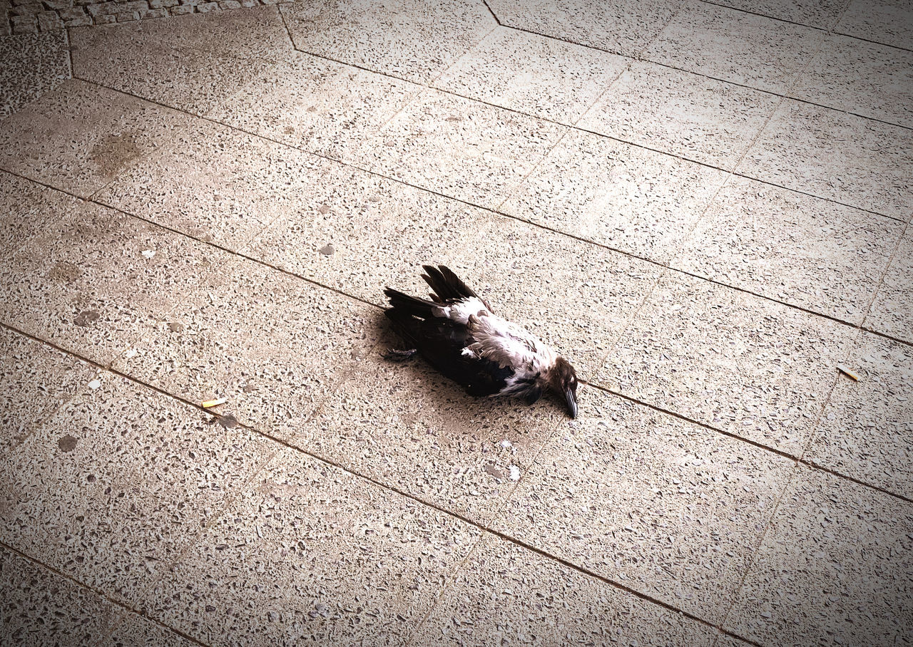 HIGH ANGLE VIEW OF BIRDS ON FLOOR