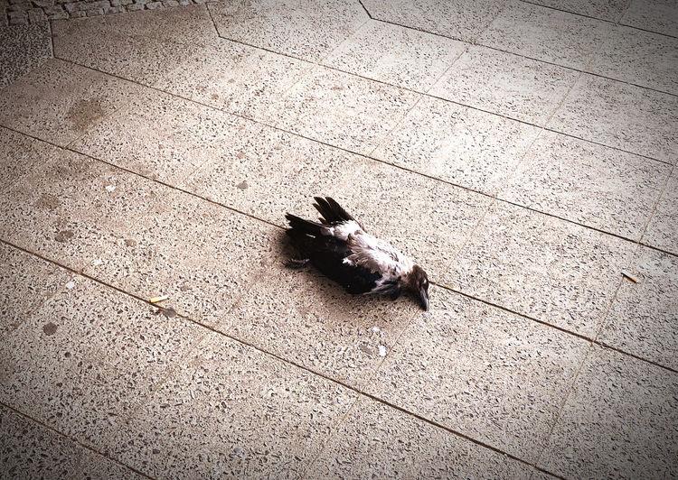 High angle view of bird on floor