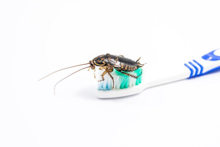 Cockroach on