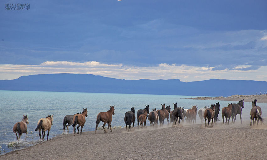sunset on Lago Argentino Argentina Cloud Clouds Clouds And Sky Horse Horses Lake Landscape Outdoors Patagonia Running Horse Sunset