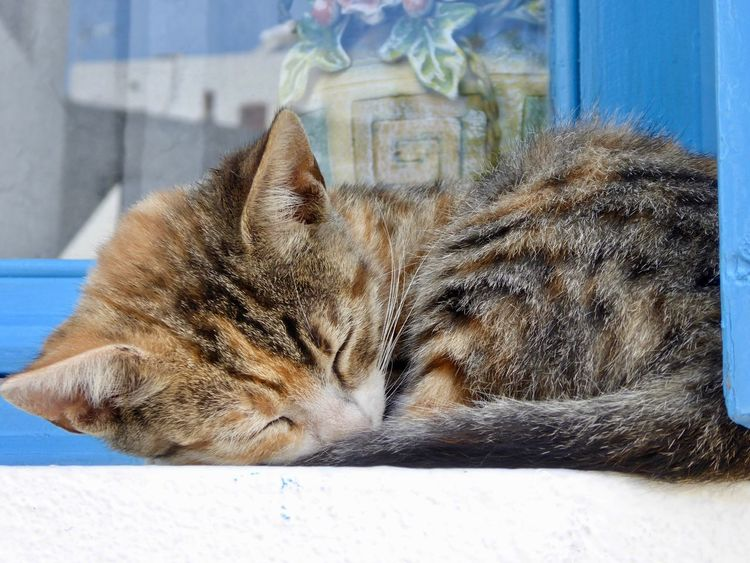 Cat Cat Lovers Cats Of Greece Catlovers Its A Cats World Kitten