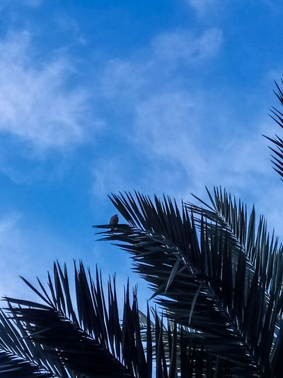 Beauty In Nature Bird Cloud - Sky Date Palms Growth Low Angle View Nature No People Outdoors Palm Leaf Palm Tree Plant Sky Tranquility