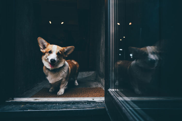 Portrait of dog sitting on window