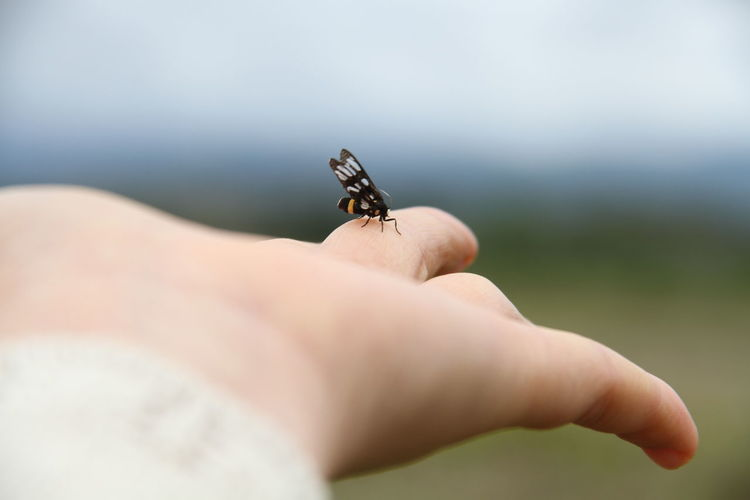 Midsection of insect on hand against blurred background