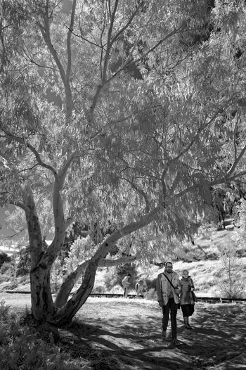 Rear view of people walking on street amidst trees