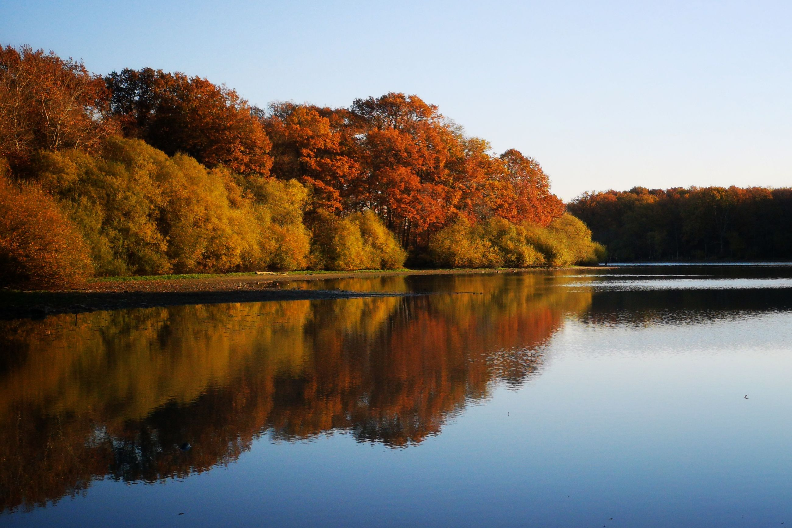 reflection, tree, water, plant, lake, autumn, beauty in nature, tranquility, change, scenics - nature, tranquil scene, sky, nature, waterfront, no people, orange color, growth, day, idyllic, outdoors, fall