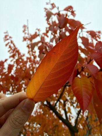 Colours Autumn Autumn Colors Autumn Leaves