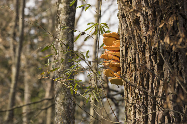 Mushrooms Growing On Tree Trunk In Forest