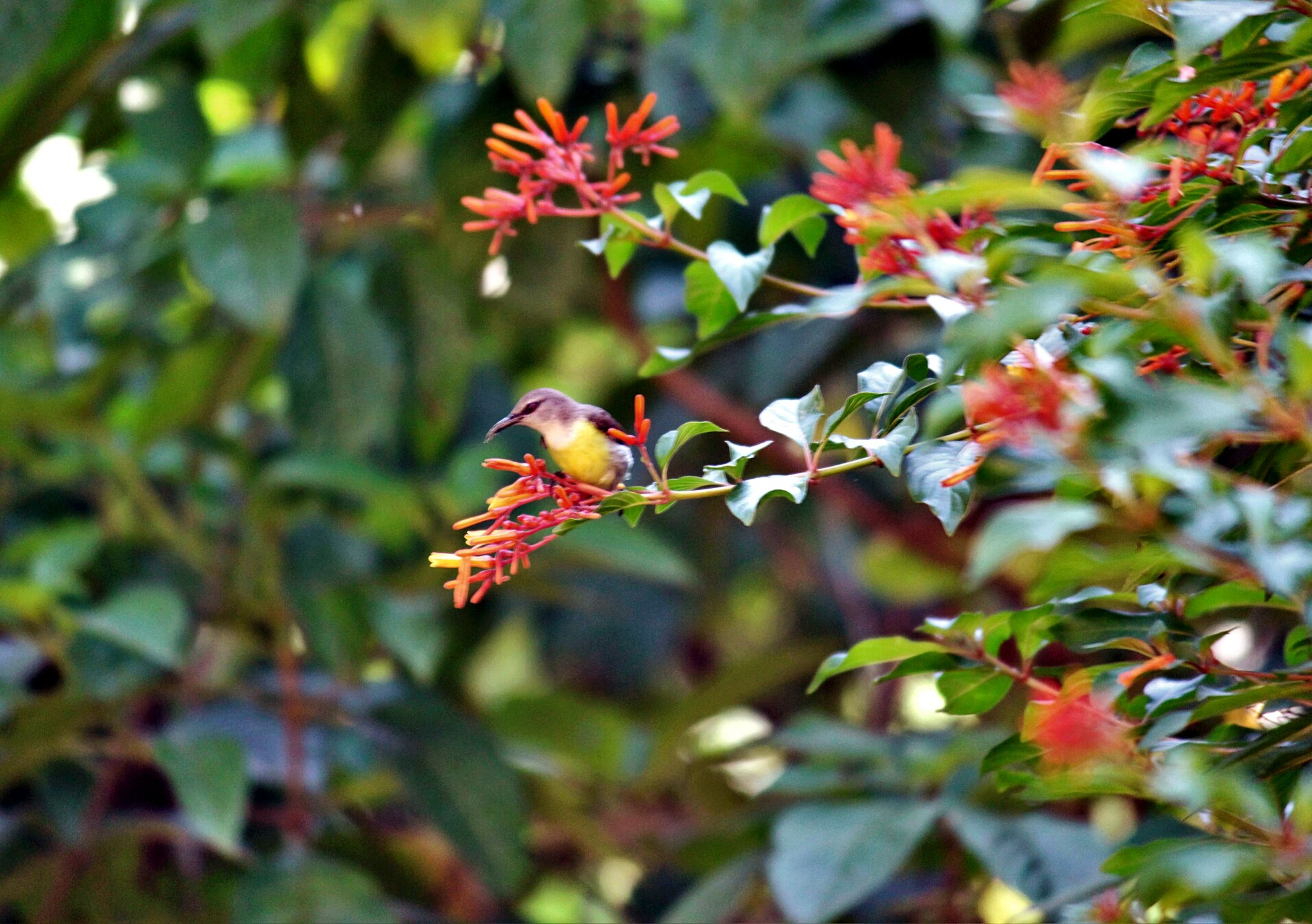 leaf, growth, branch, tree, focus on foreground, nature, close-up, red, beauty in nature, freshness, plant, autumn, twig, season, selective focus, day, outdoors, change, sunlight, no people