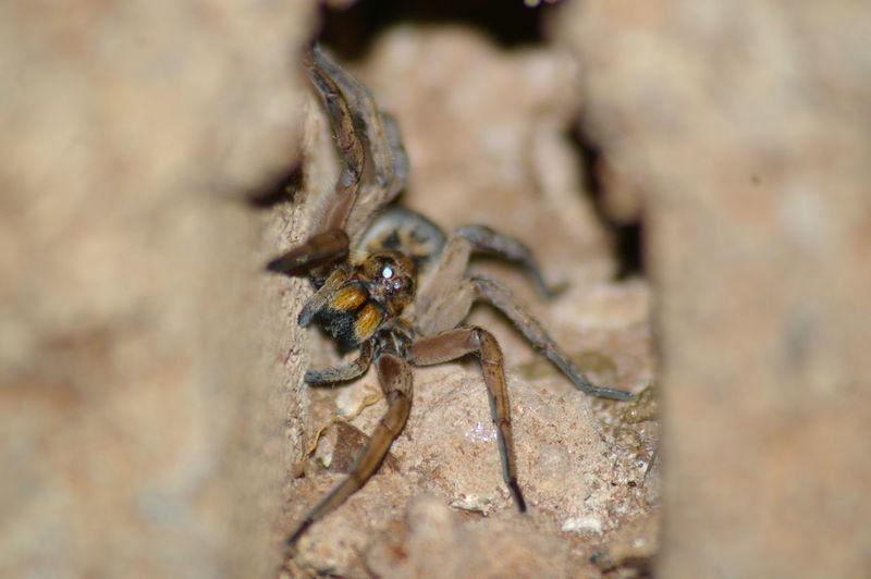 South Africa 🇿🇦 EyeEmNewHere Spider Spider Nature_collection Eyenaturelover Spider Eyes Spiders