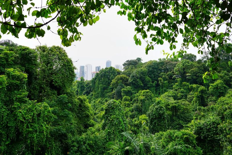Singapore Park Plant Tree Architecture Built Structure Growth Building Exterior Green Color Nature Day No People Sky City Building Outdoors Branch Beauty In Nature Plant Part Leaf Foliage Lush Foliage