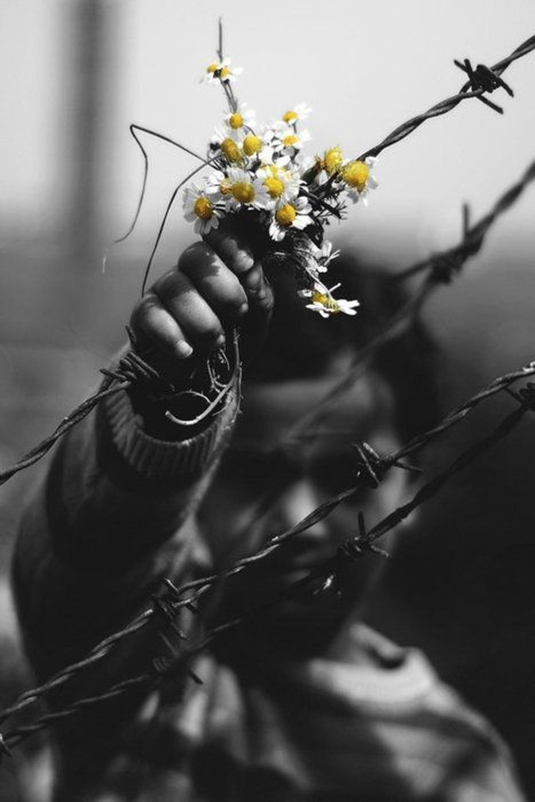flower, nature, growth, plant, branch, black color, close-up, fragility, no people, day, beauty in nature, outdoors, flower head