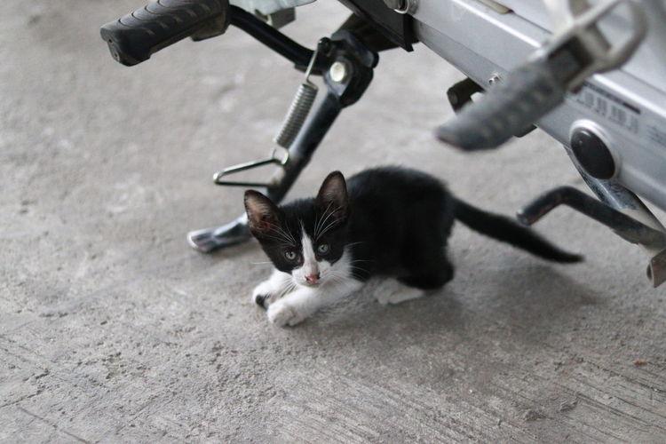 Cat Feline