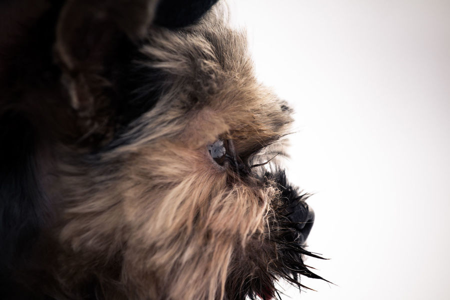 Animal Themes One Animal Dog Animal Hair Domestic Animals Pets No People Close-up Outdoors Day Yorkshire Terrier Terrier Dogs Gaze Thoughtful Winter Dog Love Check This Out Animals Nature