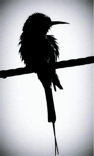 An isolated bird