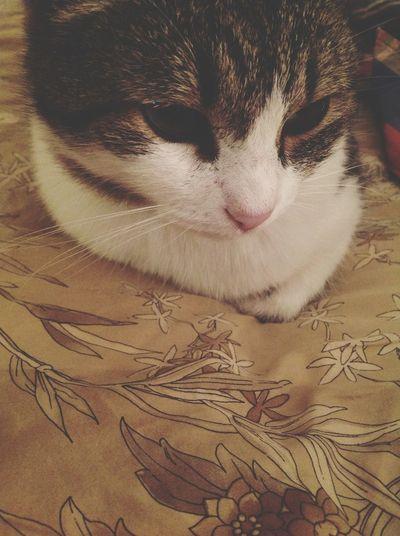 Fuips Ilysm Cat Mybaby
