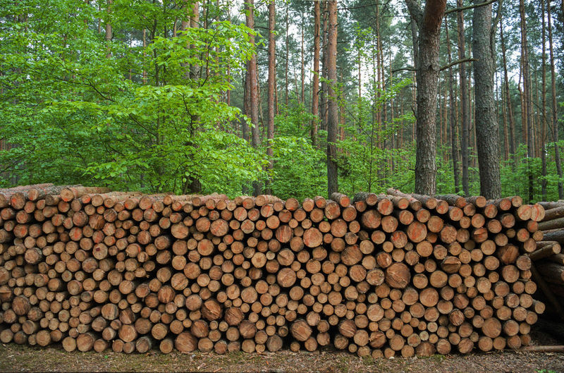 Abundance Deforestation Firewood Forest Forestry Industry Large Group Of Objects Log Lumber Industry Nature No People Outdoors Stack Timber Tree Wood - Material Woodpile