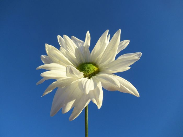 Close-up of white flowering against blue sky