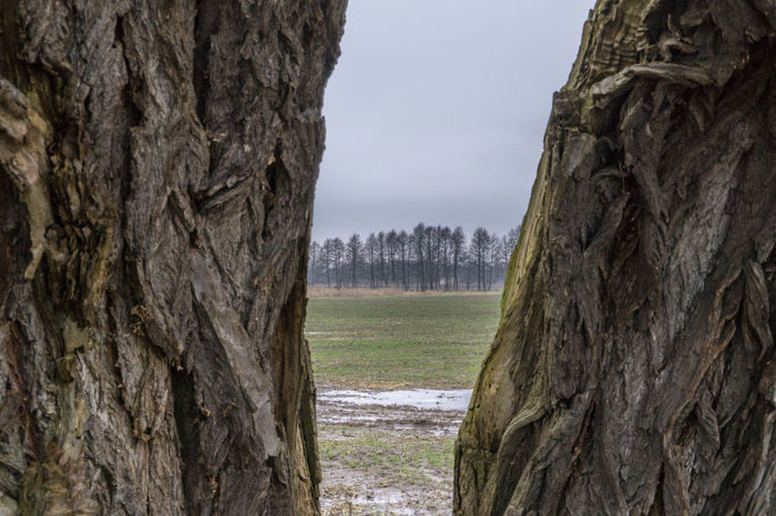 Landsscape photography in the area of Oderbruch in Germany. Bark Beauty In Nature Day Lake Nature No People Outdoors Scenics See Through Sky Tranquility Tree Tree Trunk Treeline Water