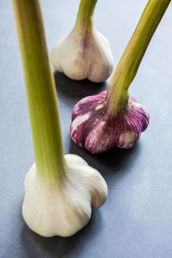 High angle view of garlic on white background
