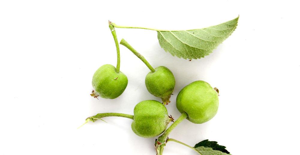unripe apples Agriculture Apple Apples Close-up Day Food Freshness Fruit Green Apple Green Color Leaf No People Unripe Unripe Apple Young Apple
