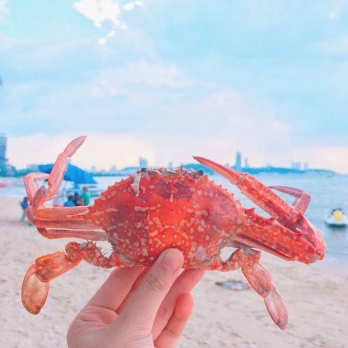 Human Hand Sky Beach Lifestyles Outdoors Day Nail Polish Crabs!! Crab - Seafood Crab Time Sea Side Sea Selective Focus Beach View Beach Day Pataya Pataya Beach