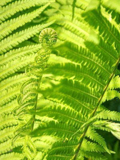 Close-up of fern leaf