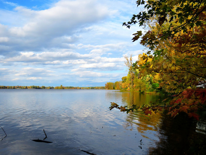 Waterscape in the fall with blue sky and white clouds by the river Water Sky Cloud - Sky Bird Tree Animal Vertebrate Animals In The Wild Animal Themes Animal Wildlife Lake Nature Beauty In Nature Plant Reflection No People Group Of Animals Tranquility Tranquil Scene Outdoors Change