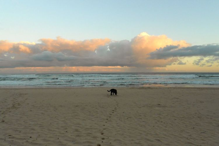 Strandhund! South Africa Wilderness Dog Beach Sea Horizon Over Water Sand Shore Seaside Seascape Clouds Water Pets One Animal Coastline Scenics Sunset Tranquility Idyllic Traces In The Sand