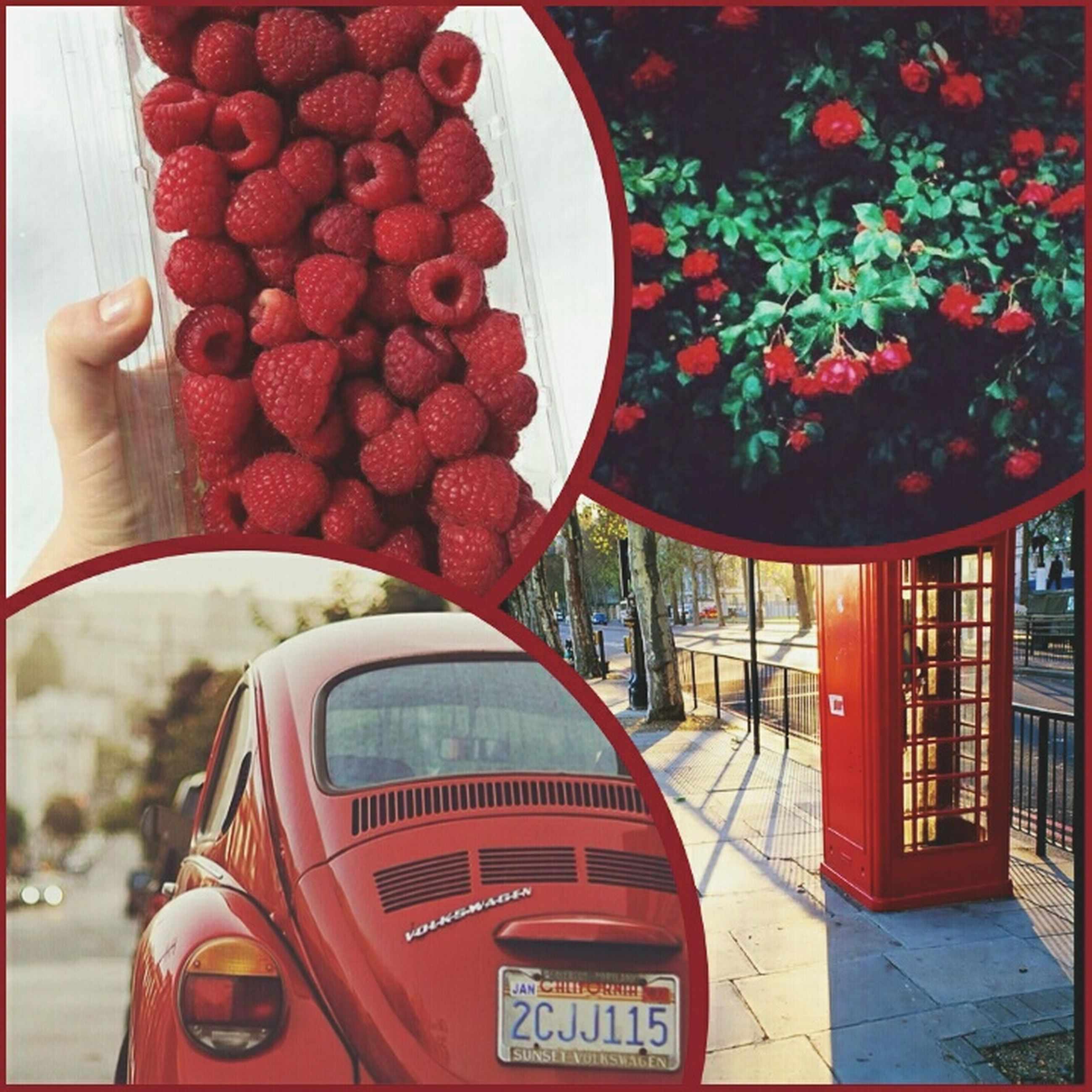 red, transportation, fruit, food and drink, day, mode of transport, land vehicle, communication, lifestyles, food, text, close-up, part of, car, outdoors, holding, tree, cropped
